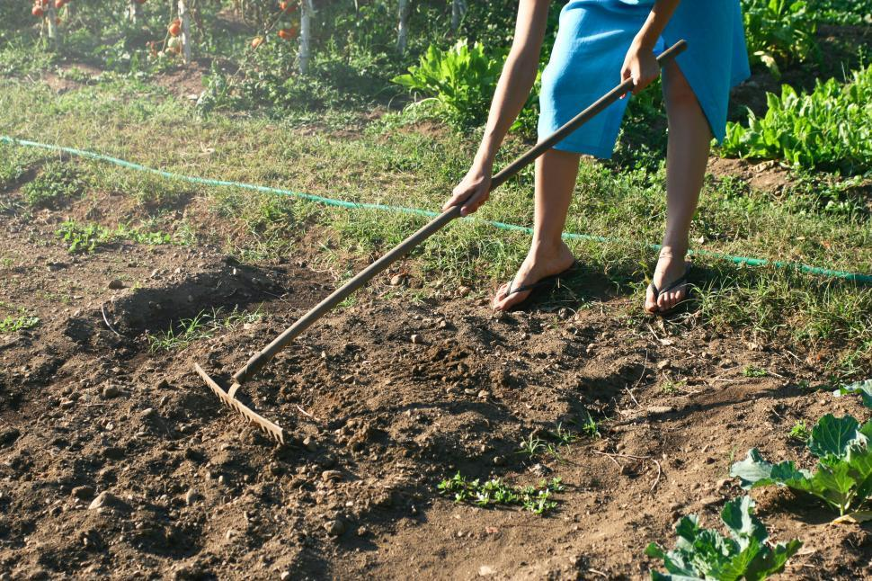 Download Free Stock HD Photo of A woman raking the soil in the garden Online