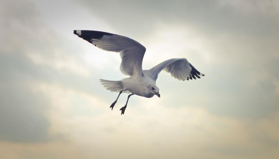 Download Free Stock HD Photo of Seagull flying in the sky Online
