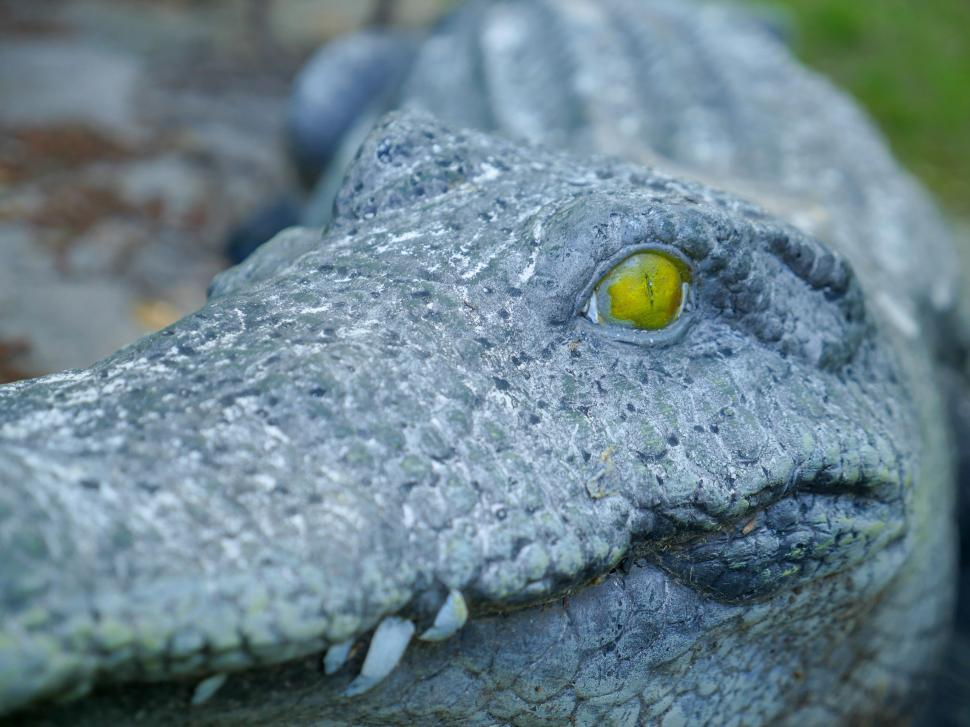Download Free Stock HD Photo of Closeup of stone alligator head and eye Online