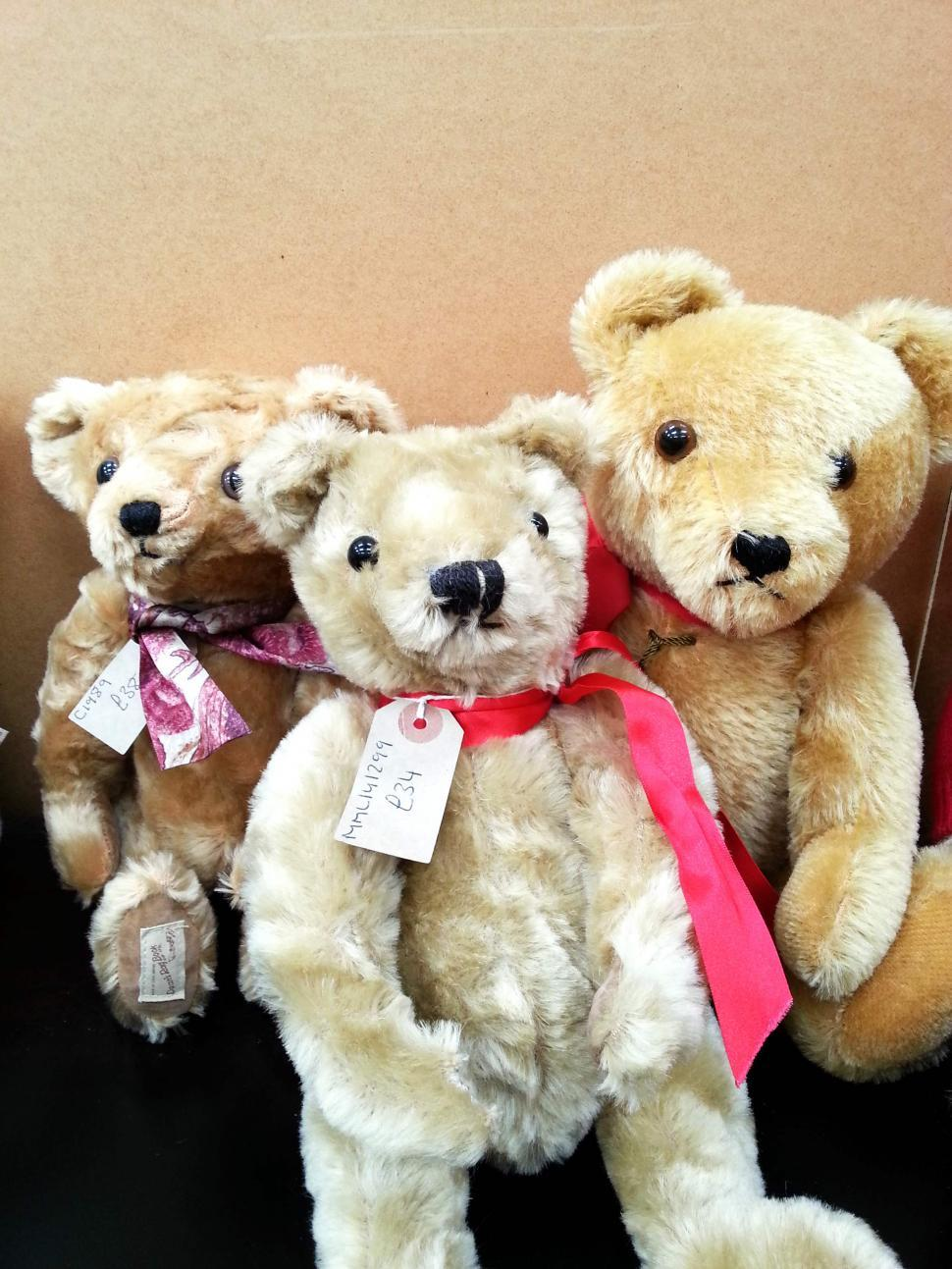 Download Free Stock HD Photo of Teddy Bears For Sale  Online