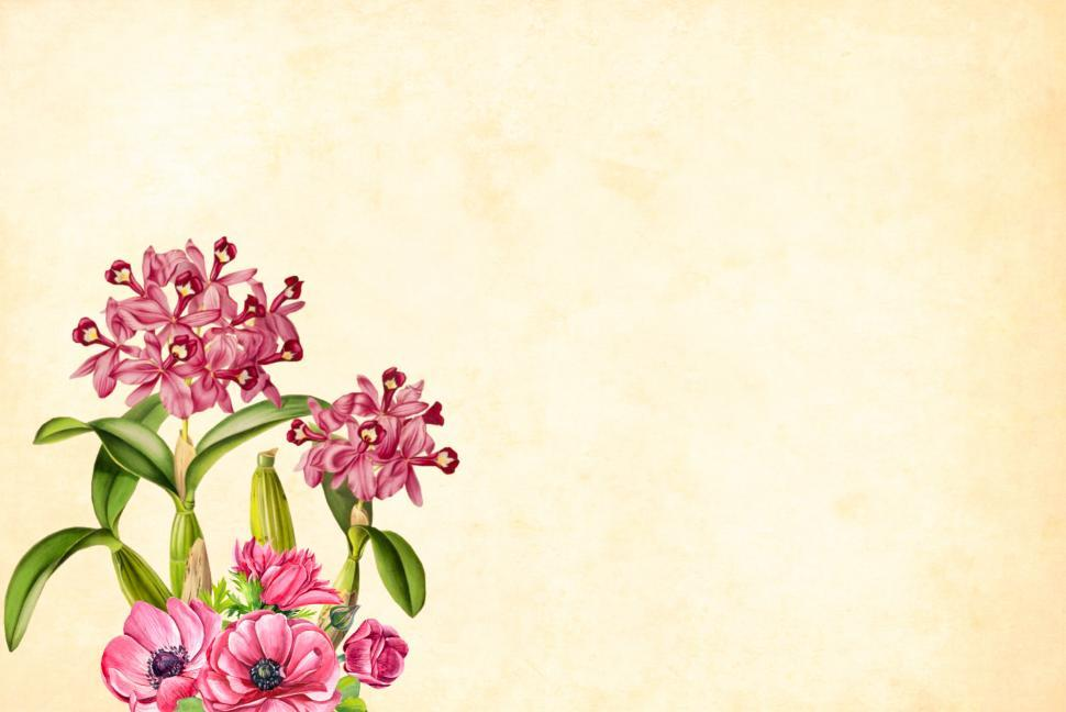 Get Free Stock Photos Of Flower Background Online Download Latest