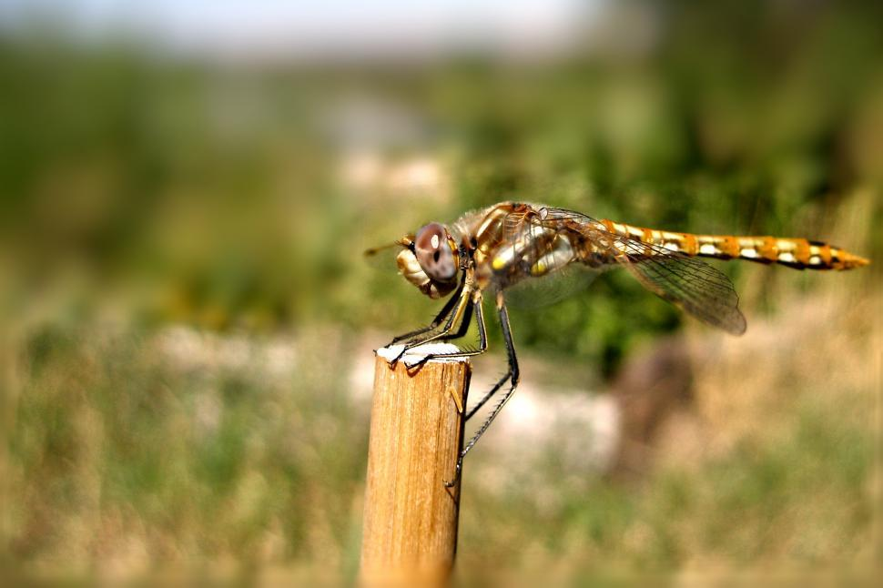 Download Free Stock HD Photo of Dragonfly Resting Online