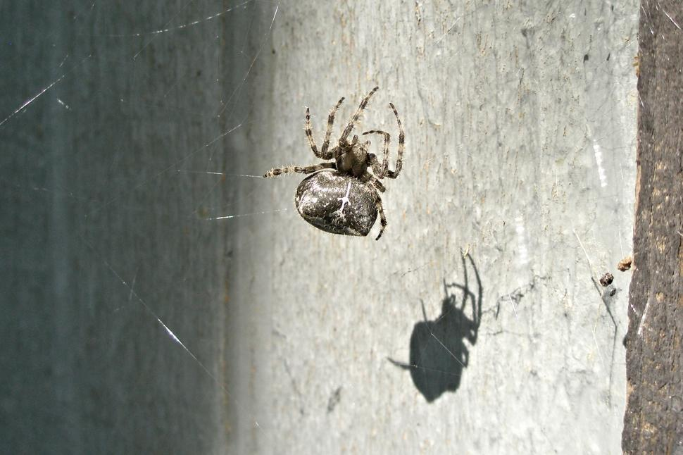 Download Free Stock HD Photo of Orb Spider Online