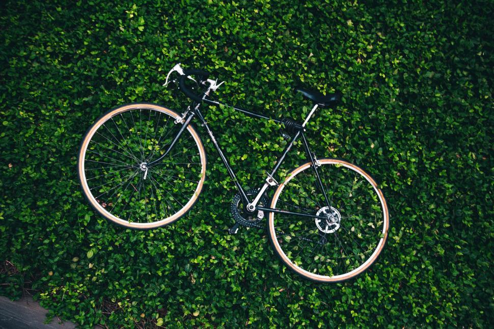 Download Free Stock HD Photo of A bicycle in the garden Online