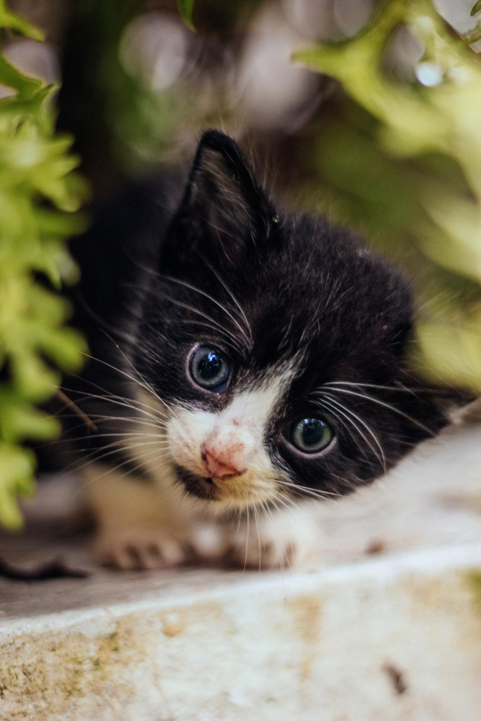 Download Free Stock HD Photo of Curious cat in the garden Online