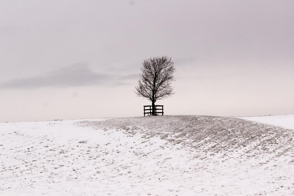 Download Free Stock HD Photo of A tree on a snowy hill Online