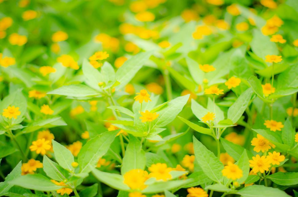 Download Free Stock HD Photo of Yellow Flower  Online