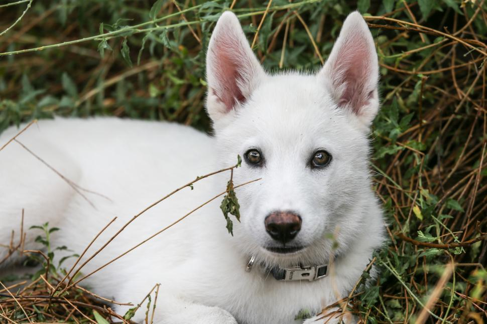 Download Free Stock HD Photo of Puppy in the Grass Online