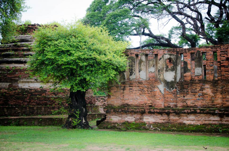 Download Free Stock HD Photo of Temple wall with tree Online
