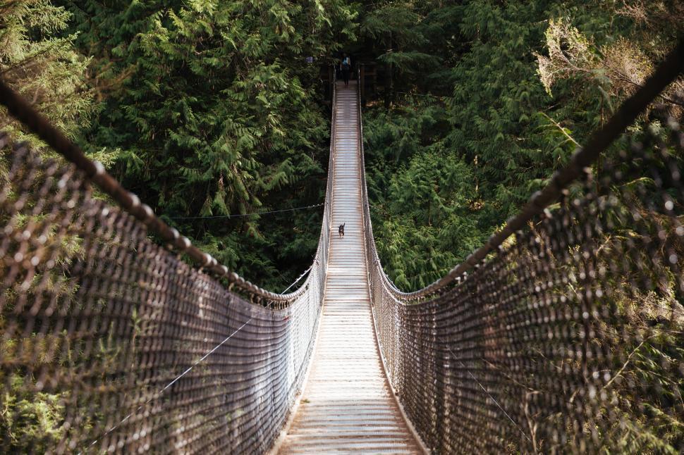 Download Free Stock HD Photo of Dog runs across the hanging bridge Online