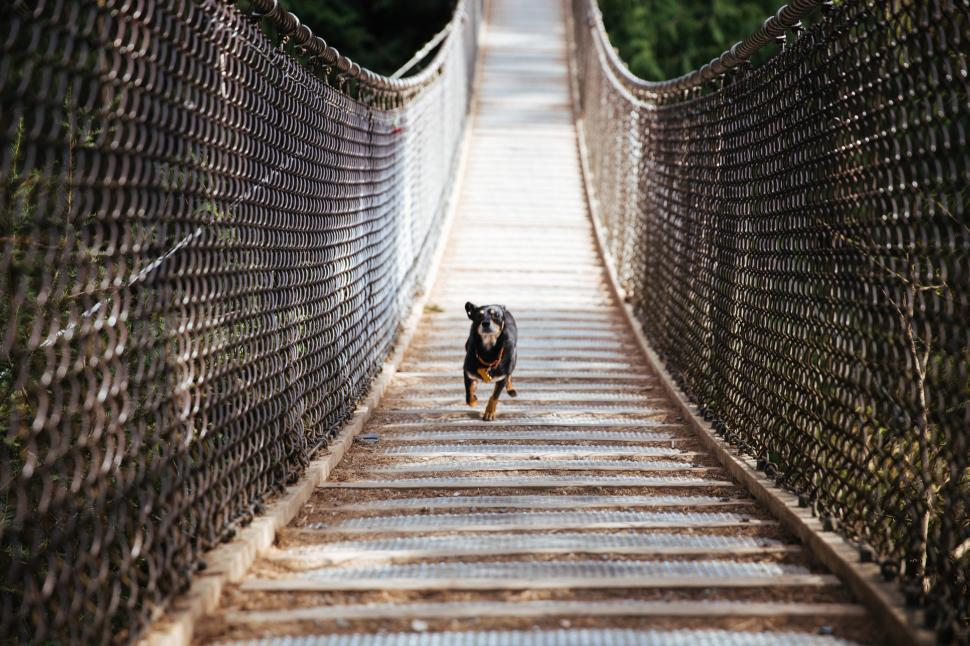Download Free Stock HD Photo of Happy dog running across the hanging bridge Online
