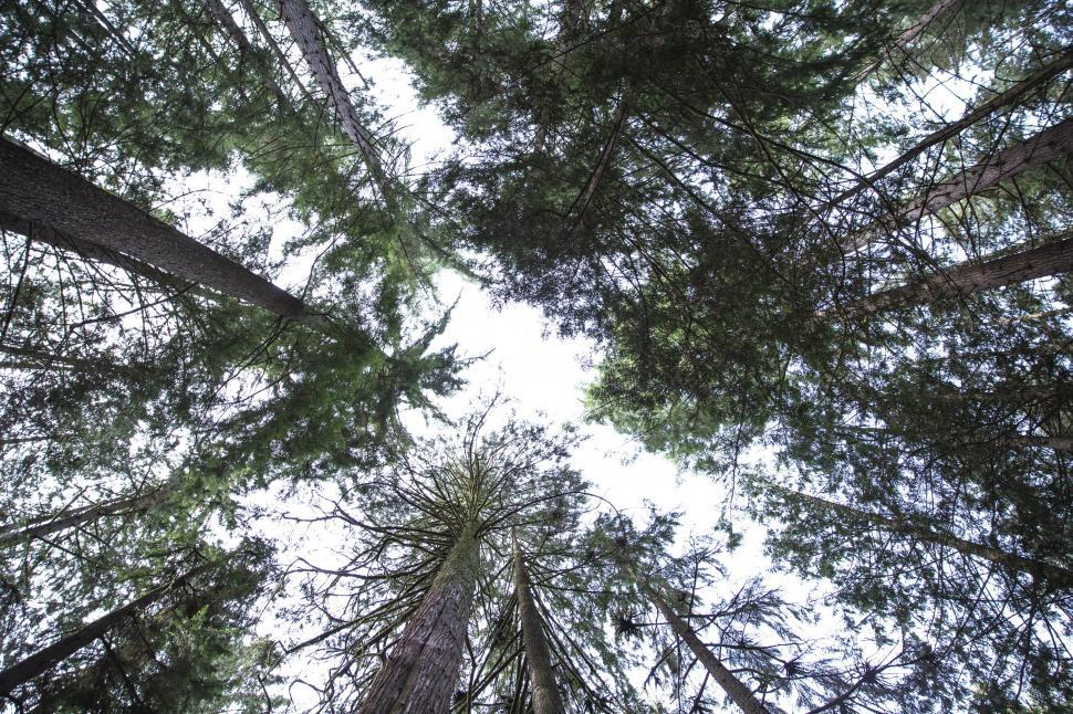 Download Free Stock HD Photo of Looking up at trees in the forest Online