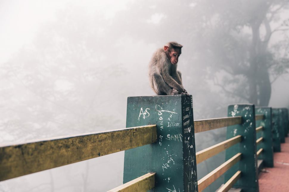 Download Free Stock HD Photo of Snow monkey sitting on the fence column in Japan Online