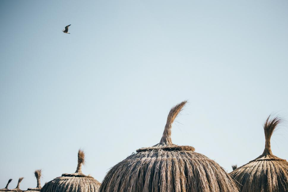 Download Free Stock HD Photo of Dry grass umbrellas Online