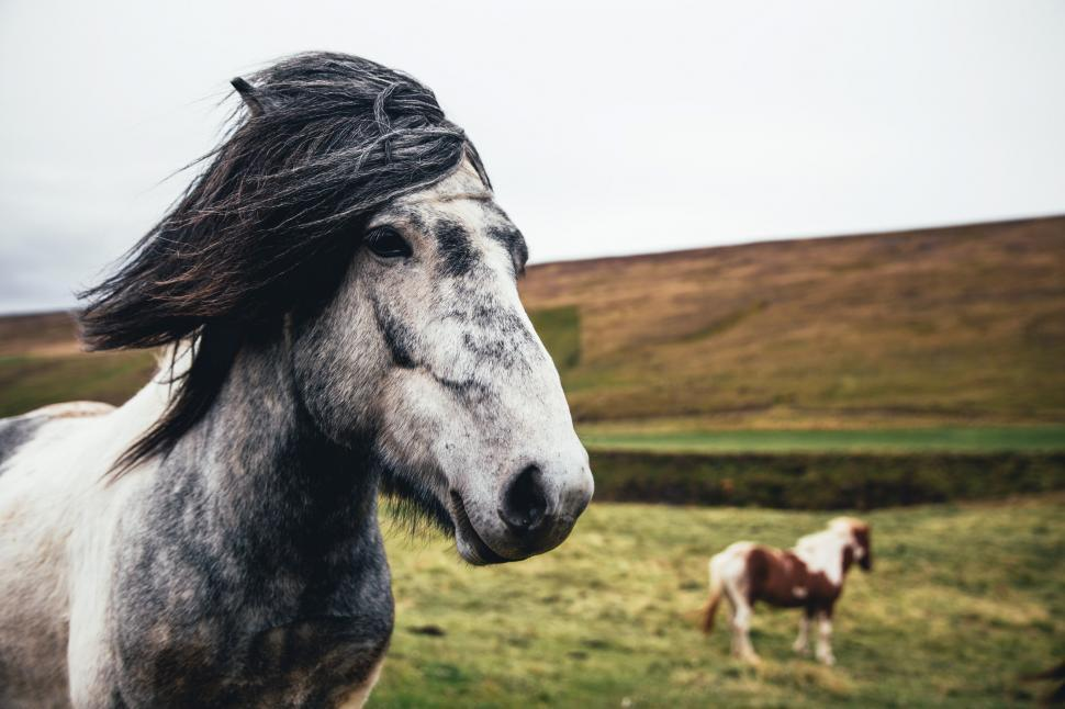 Download Free Stock HD Photo of Two long haired horses in the field Online