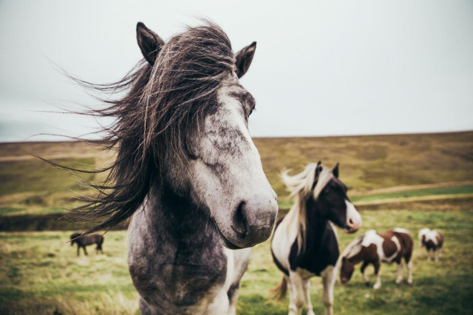 Download Free Stock HD Photo of Long haired horses in the field Online