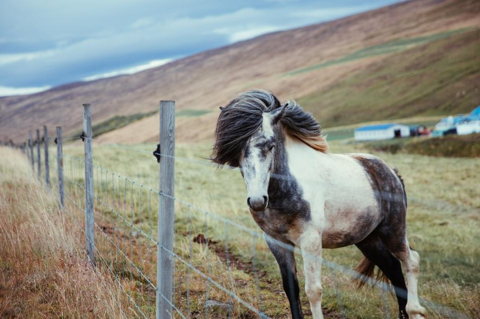 Download Free Stock HD Photo of A long haired horse standing by fence Online