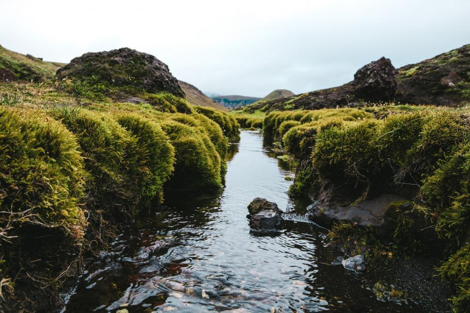 Download Free Stock HD Photo of Bushes around a fresh water stream Online