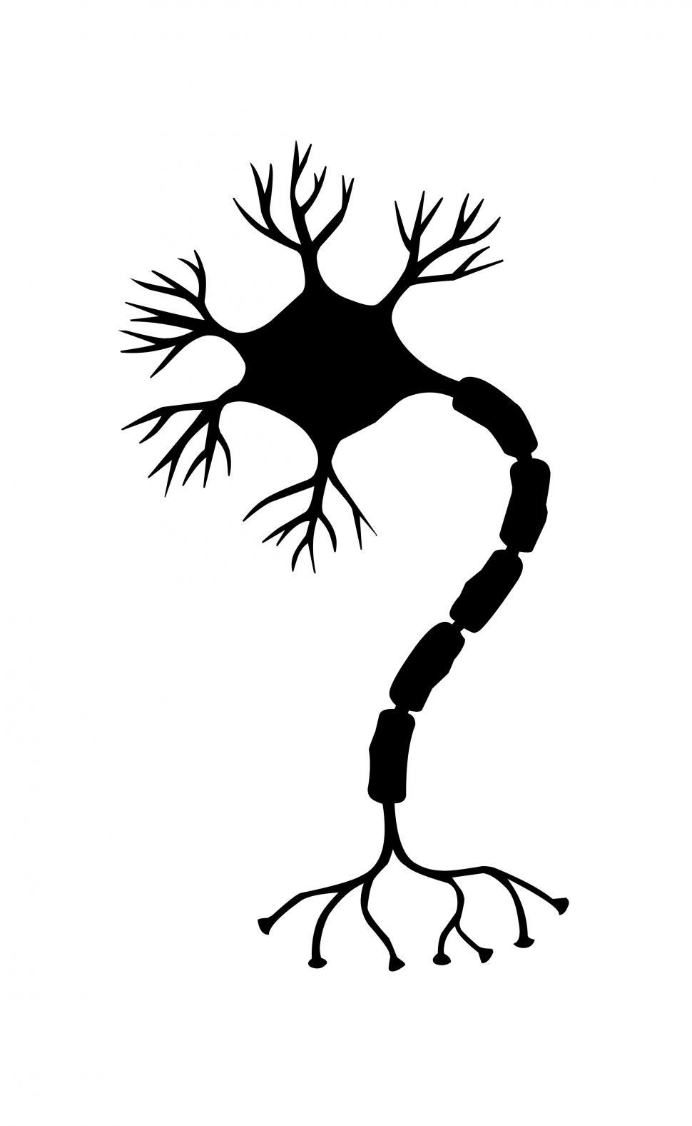 Download Free Stock HD Photo of nerve cell Silhouette  Online