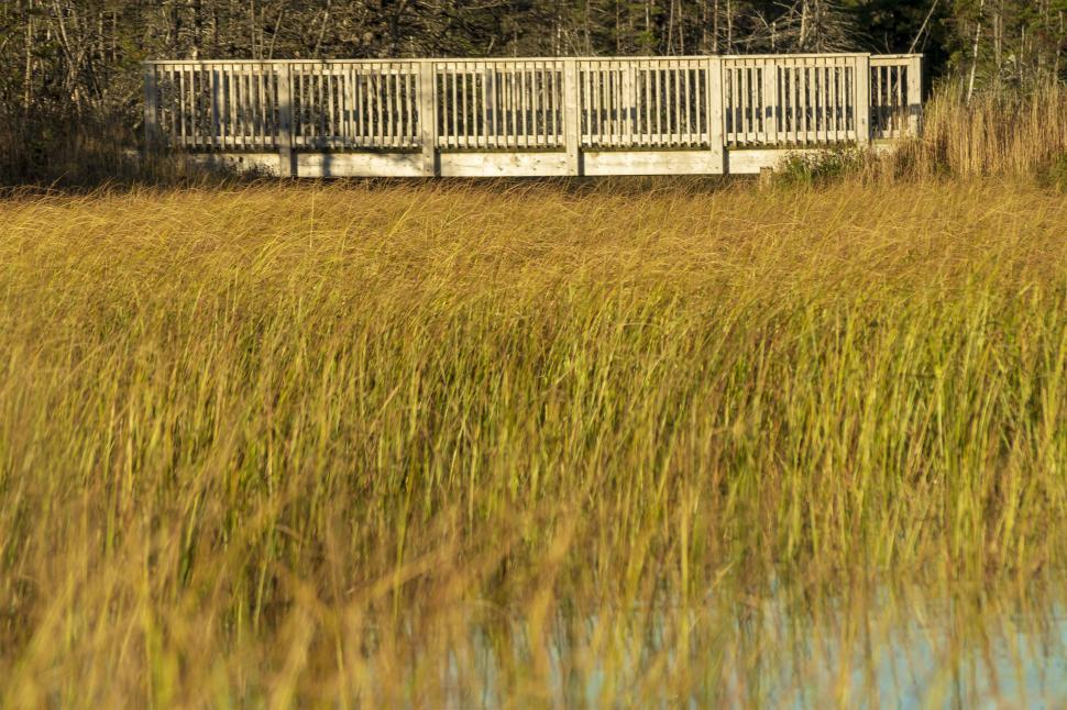 Download Free Stock HD Photo of Bridge on a walking trail Online