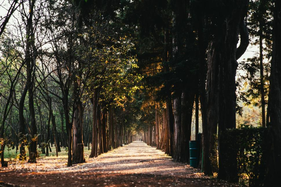 Download Free Stock HD Photo of A sunlit path in the park Online