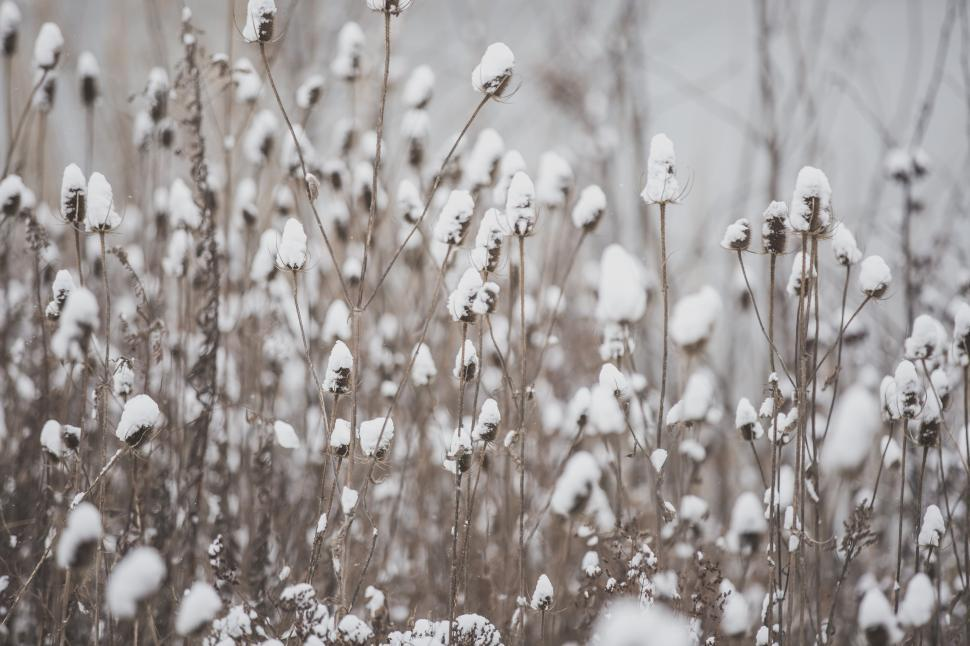 Download Free Stock HD Photo of Snow covered dried up wildflowers Online