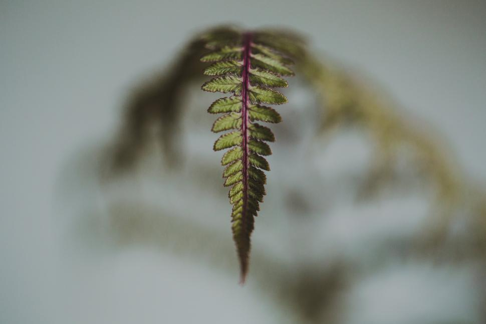 Download Free Stock HD Photo of Close up of a fern leaf Online