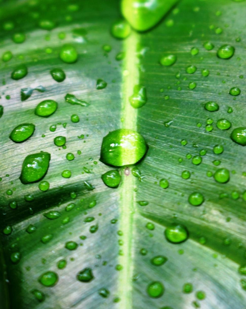 Download Free Stock HD Photo of Water drops on a green tropical leaf  Online