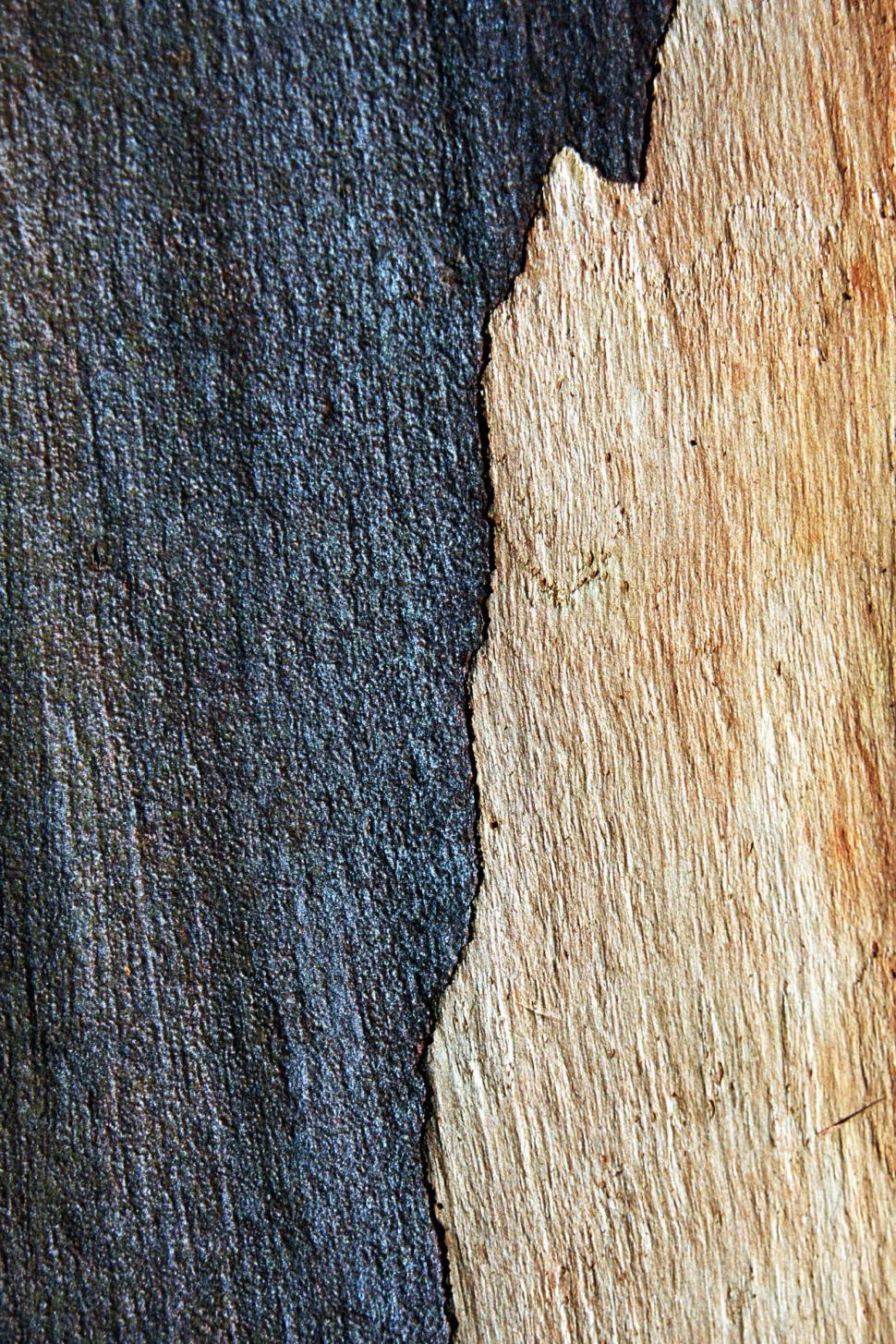 Download Free Stock HD Photo of Bark background Online