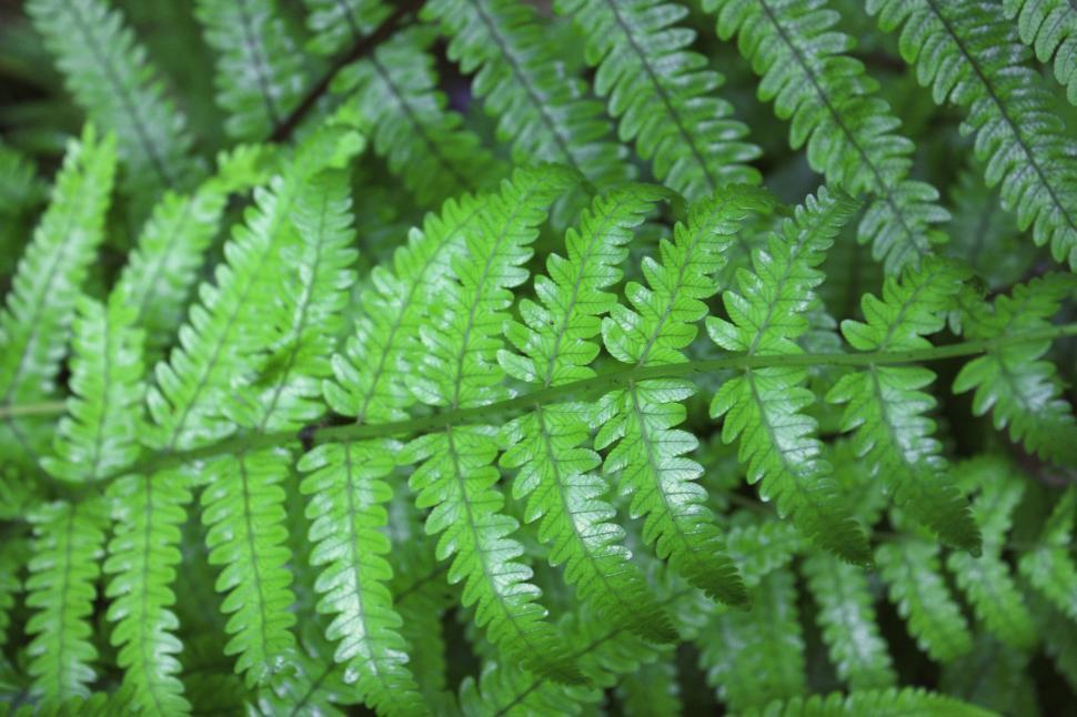 Download Free Stock HD Photo of Green fern leaves after rainNew Zealand fern Online