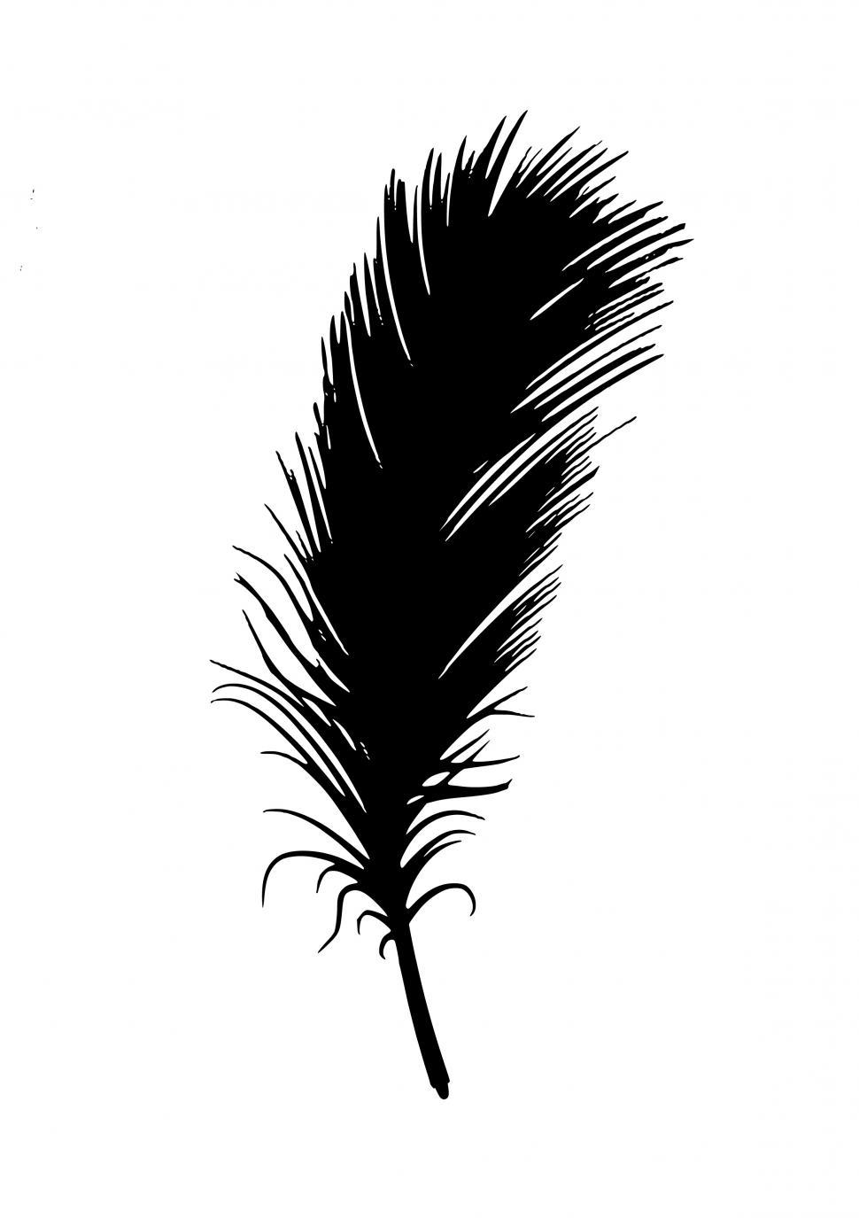 Download Free Stock HD Photo of feather Black Silhouette  Online
