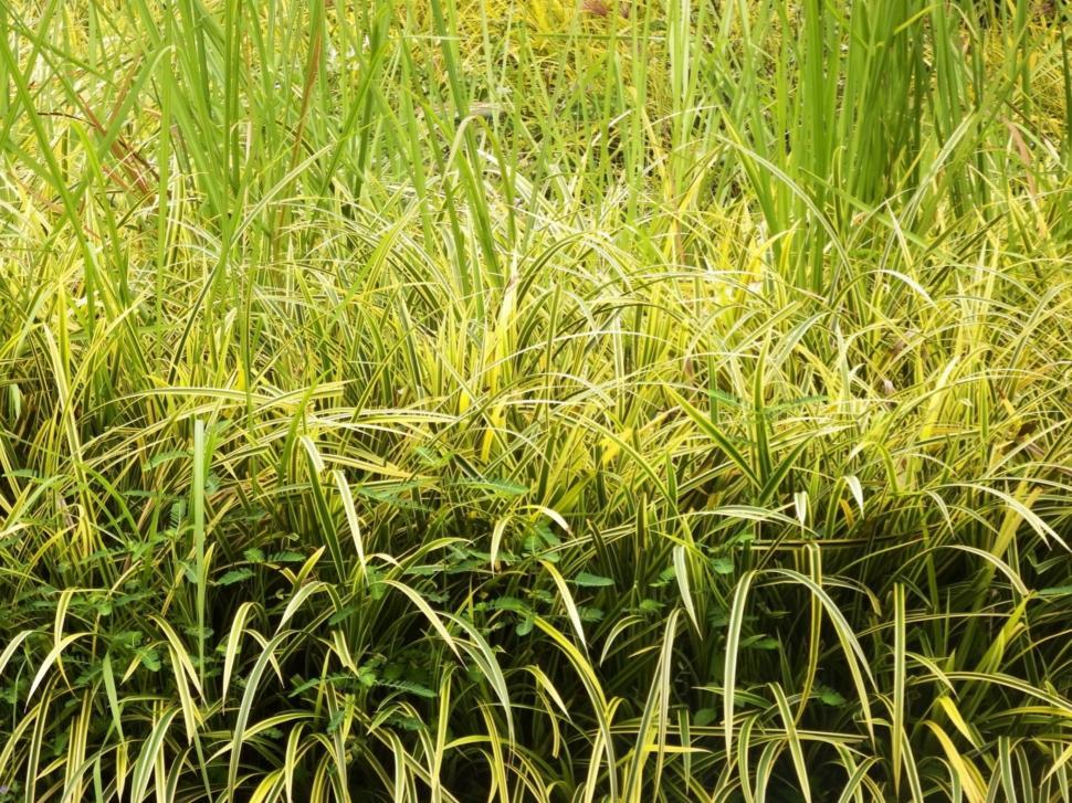 Download Free Stock HD Photo of Long tropical grass close up texture  Online