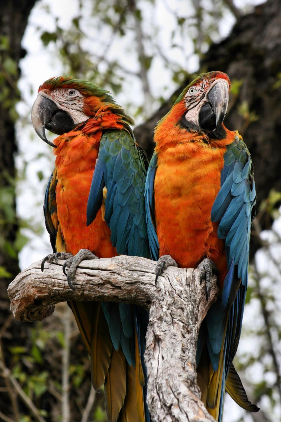 Download Free Stock HD Photo of Parrots Online