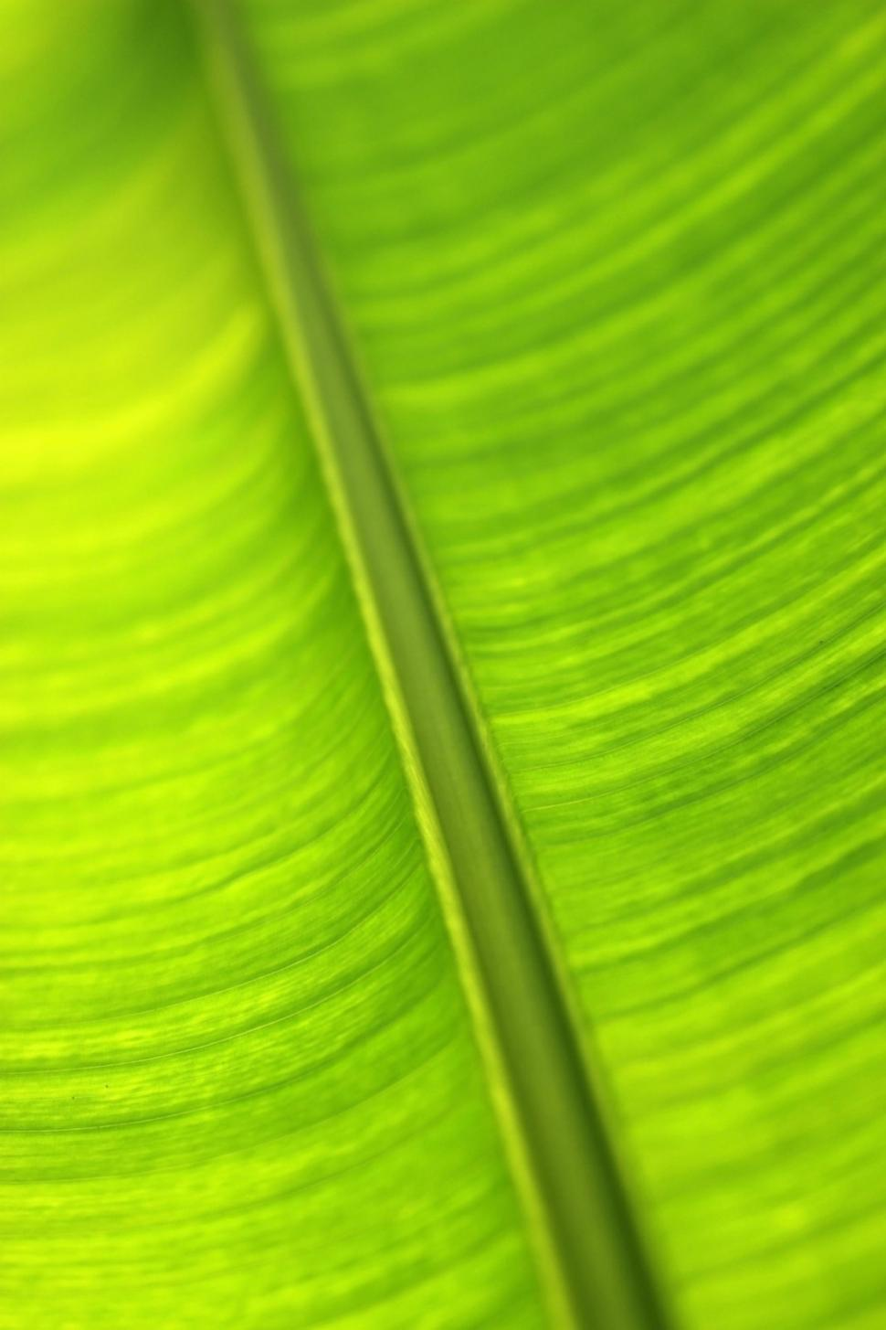 Download Free Stock HD Photo of Backlit green tropical leaf abstract background  Online