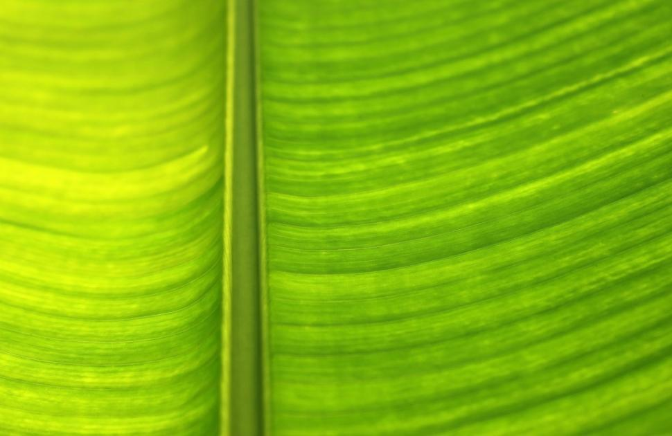 Download Free Stock HD Photo of Backlit green leaf abstract tropical background  Online