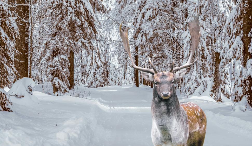 Download Free Stock HD Photo of winter deer  Online