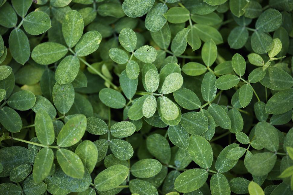 Download Free Stock HD Photo of Close up of small green leaves Online
