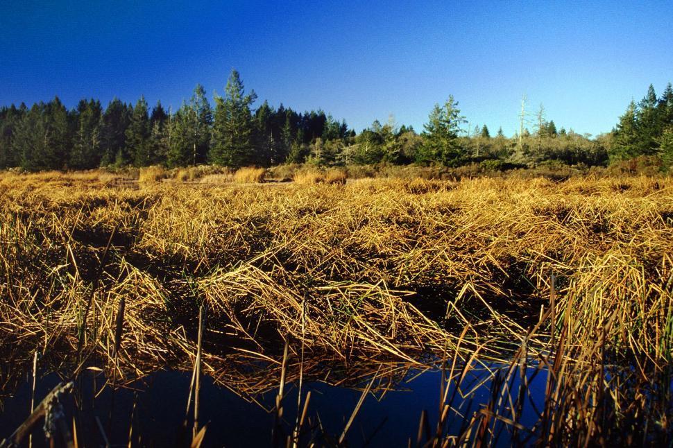 Download Free Stock HD Photo of Dense marshland Online