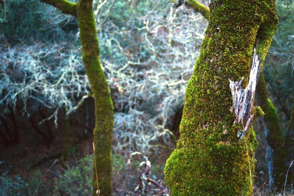 Download Free Stock HD Photo of Mossy tree trunk in the forest Online