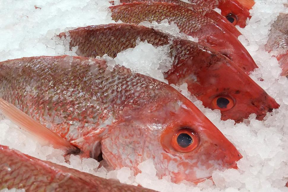 Download Free Stock HD Photo of Red Snappers on Ice at Market Online