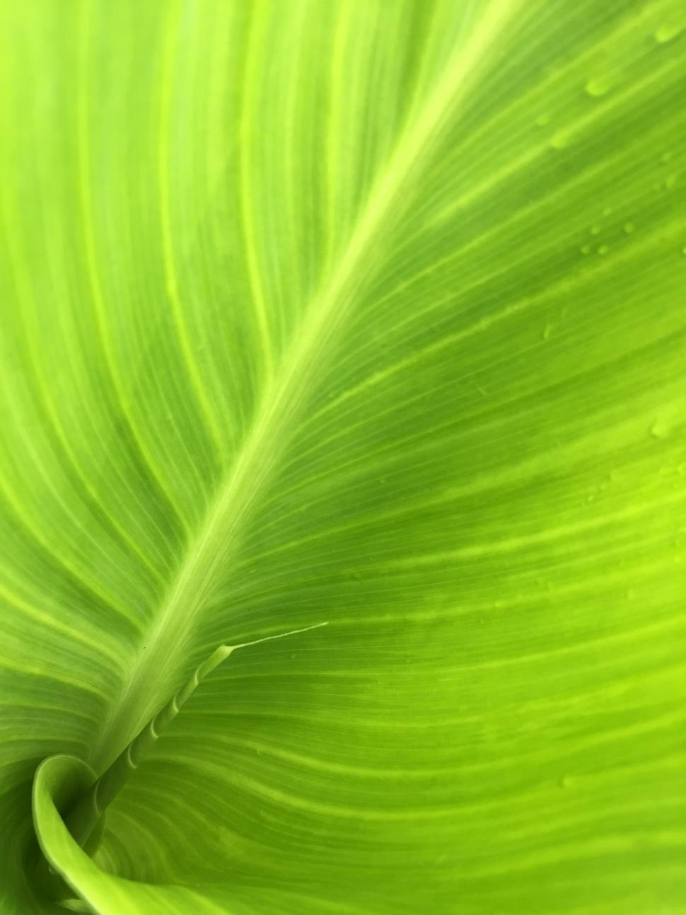 Download Free Stock HD Photo of Green leaf with veins  Online