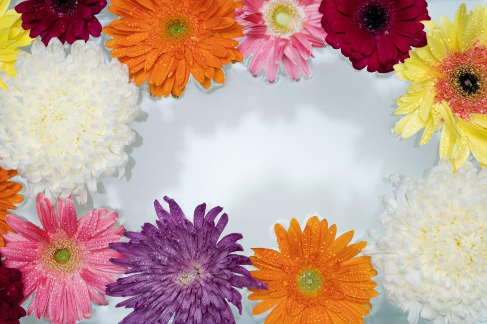 Download Free Stock HD Photo of Chrysanthemum and daisy flowers on white background Online