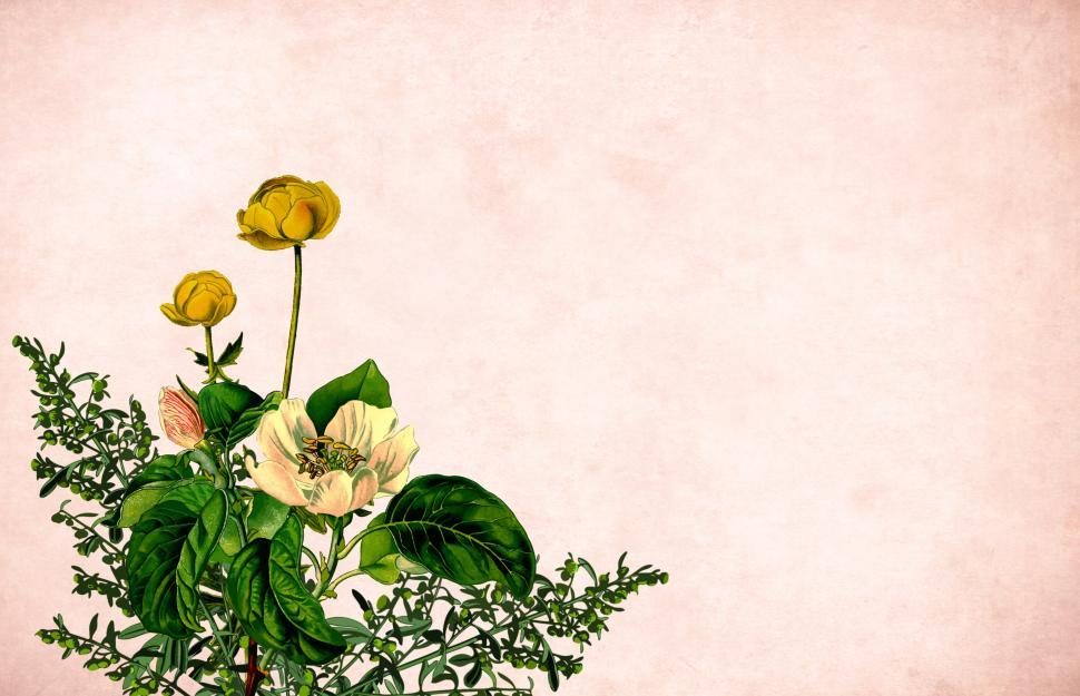 Download Free Stock HD Photo of Flower background - Mixed Cluster Online