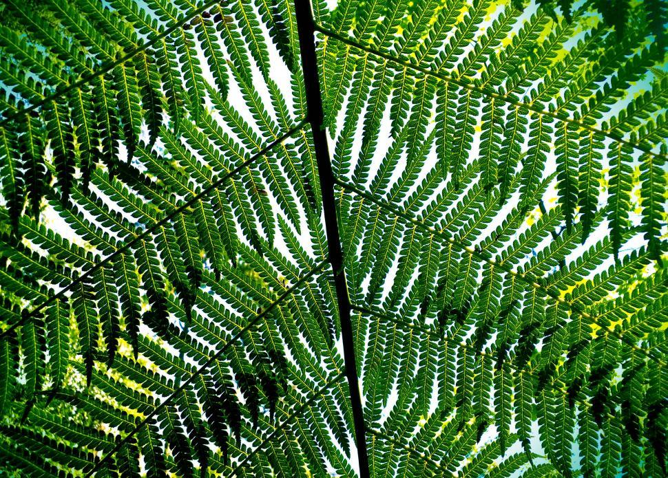 Download Free Stock HD Photo of Giant Fern Leaves - Bussaco National Forest - Portugal Online