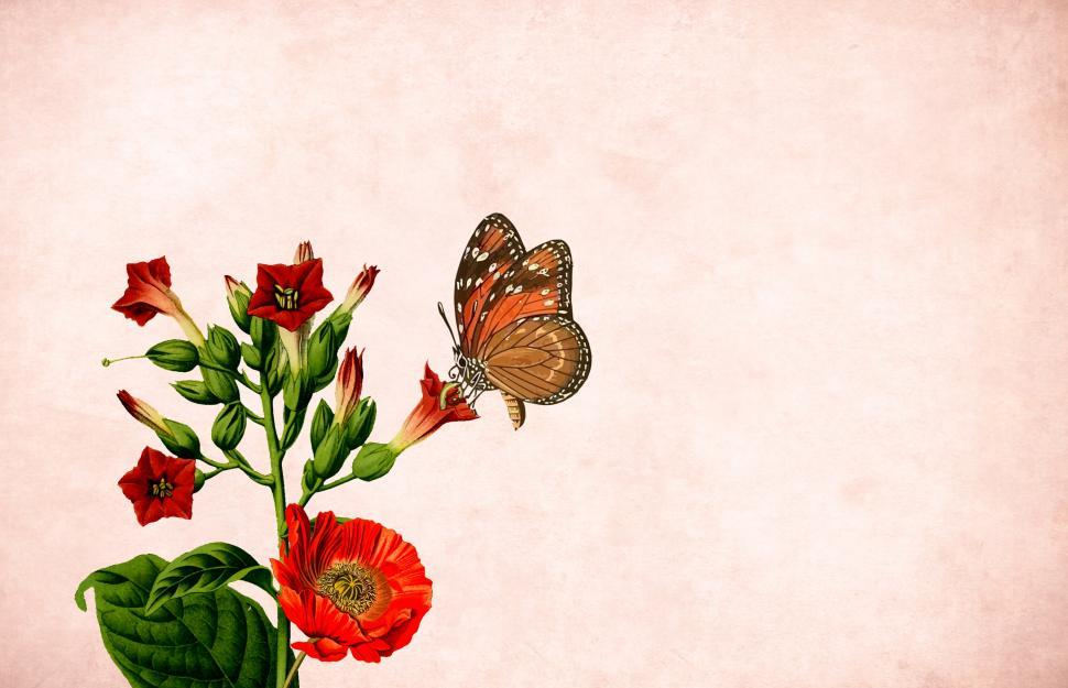 Download Free Stock HD Photo of Flower background - WIth Butterfly Online
