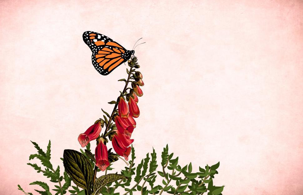 Download Free Stock HD Photo of Flower butterfly - Red blooms Online