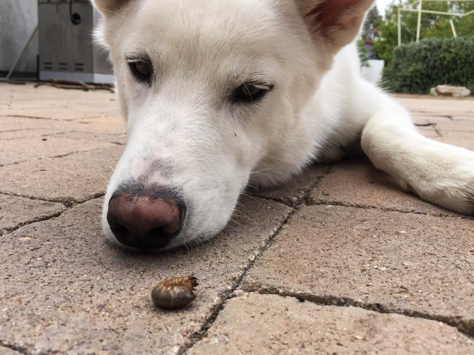 Download Free Stock HD Photo of White Dog Looks at a Grub Online