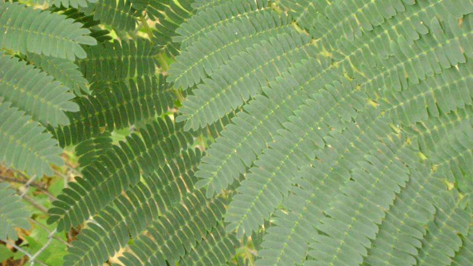 Download Free Stock HD Photo of Fern leaves Online