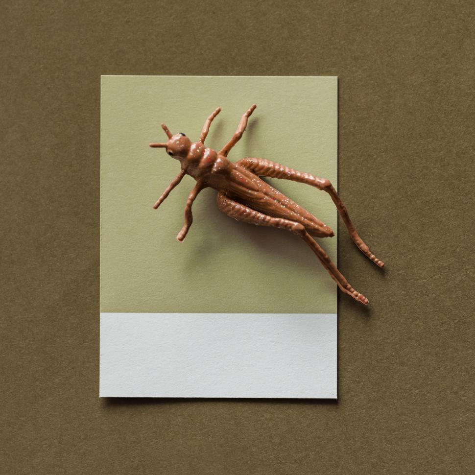 Download Free Stock HD Photo of Flay lay of a miniature toy grasshopper on a spaced cardboard frame Online
