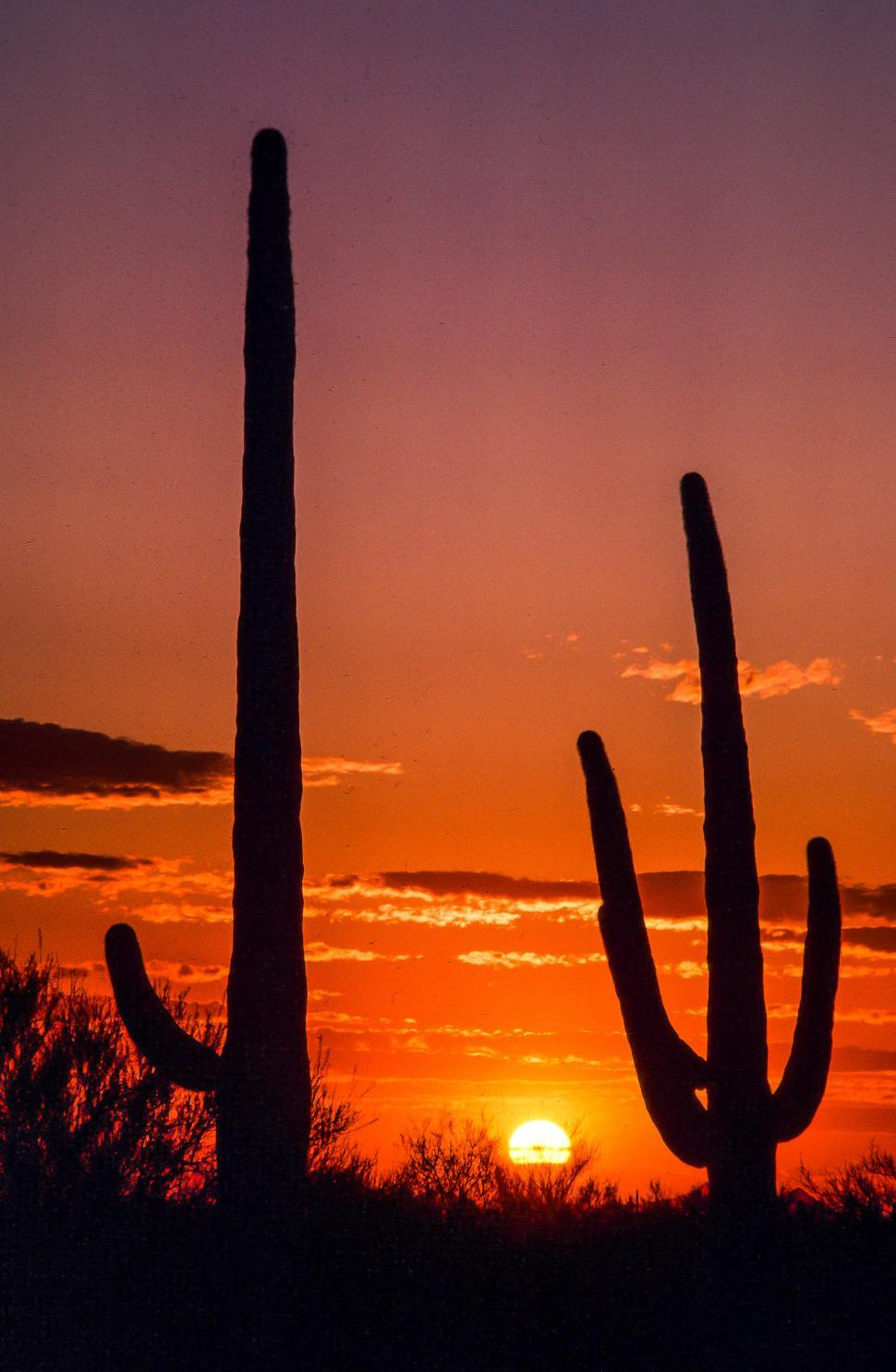 Download Free Stock HD Photo of Saguaro Cactus and sunset in Arizona Online
